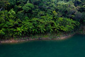 沖縄 やんばるの森と水辺