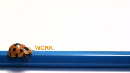 ladybug, beatle push The word Work change to Holiday.