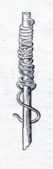 Guinea worm (Dracunculus medinensis)