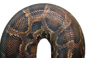 detail on  burmese python skin