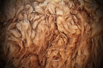 llama dirty fur