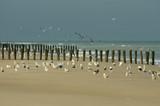 Fototapety oiseaux sur le sable