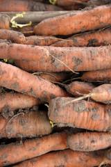 carottes en vrac