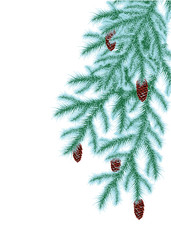 frosted spruce branches with cones