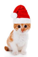 Little kitten in Santa Claus hat isolated on white