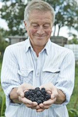 Senior Man On Allotment Holding Freshly Picked Blackberries