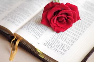 красная роза на раскрытой Библии