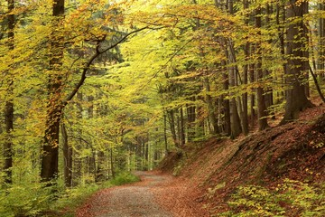 Trail through the picturesque autumnal forest