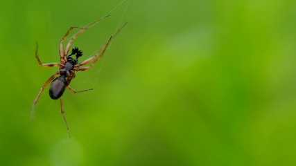 Spider on a green background on a spider web