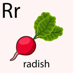 Hand drawn radish illustration