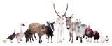 Group of farm animals on white - 72473977