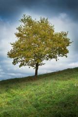 arbre champs