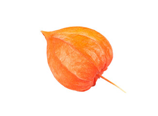 Dry flower of physalis isolated on white background