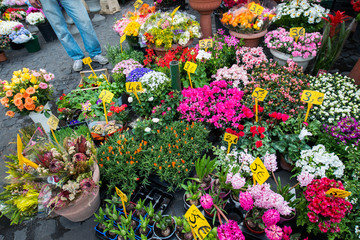 Street flower shop with colourful flowers