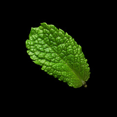 Mint leaf on black background