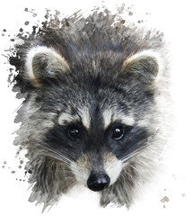 Raccoon Portrait