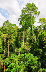 Tropical Forest of Kakum National Park, Ghana