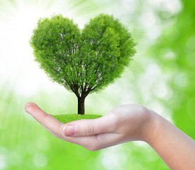Growing tree in the shape heart in hand