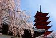 Japanese cherry blossoms & pagoda