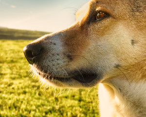 dog face (259)