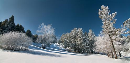 Snowy forest, Vitosha mountain, Bulgaria