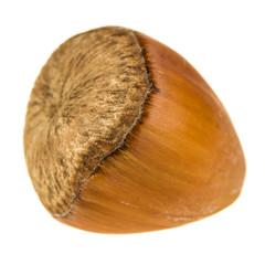 Hazelnut isolated on white