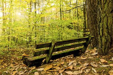 Kraftort Wald: Einladung zum Ausruhen und Genießen :)