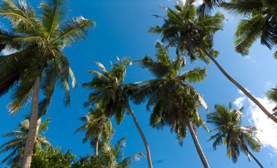Plants Palms Garden