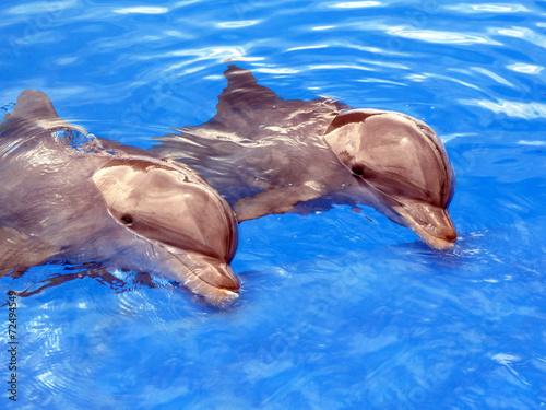 Foto op Canvas Dolfijn Delfine