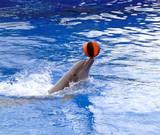Spielender Delfin
