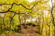 Einladung zum Träumen:  Herbstwald mit Morgensonne :)