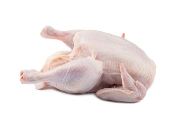 Crude Hen on a white background