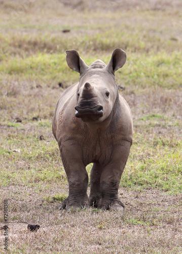 Foto op Canvas Neushoorn Nashornbaby