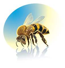 Illustration of bee