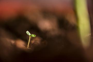 Tiny plant