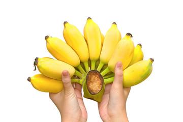Bunch of organic banana in hands.