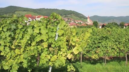 Wachau - 015 - Weissenkirchen