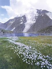 mountains altai flowers lakes glaciers