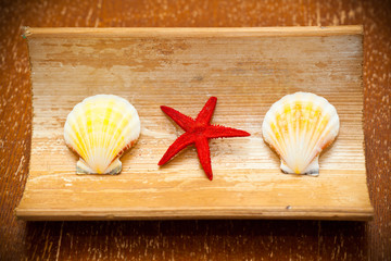 starfish and shells in red on a wooden surface
