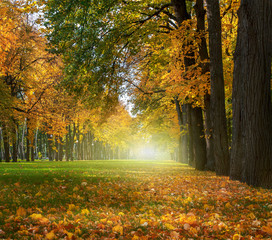 Beautiful romantic alley in a park with colorful trees, autumn