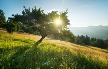 Rays in tree during sunrise. Beautiful natural landscape