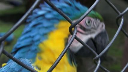 Caged Parrots, Birds, Animals, Wildlife, Nature