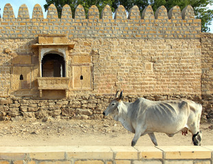 Indian cow on background of ancient building