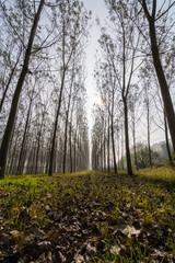Prospettiva di alberi in autunno