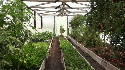Greenhouse, Plants, Vegetables, Agriculture