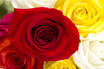 Beautiful bouquet of colorful roses