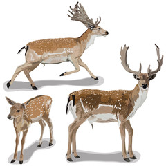 Set of Deers