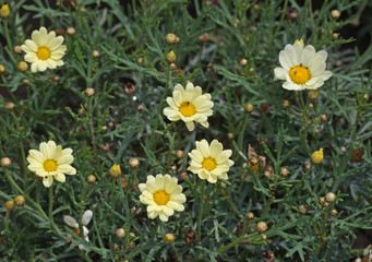 Yellow flowers are trembling in the wind