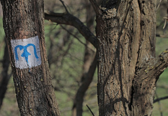 Blue M character sign tourist hiking route on a tree