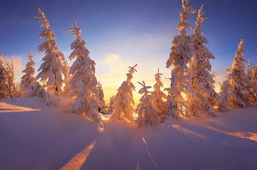 Fabulous winter forest